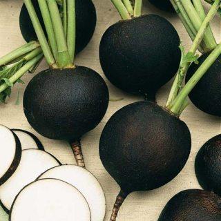 Чем полезна черная редька для организма. Черная редька в народной медицине. Черная редька выращивание и уход.