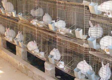 Кролиководство бизнес