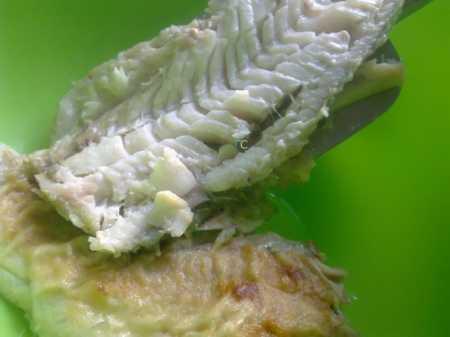 выкладывание рыбы для маринования