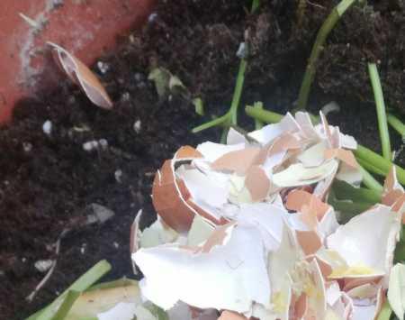 яичная скорлупа - применение на даче