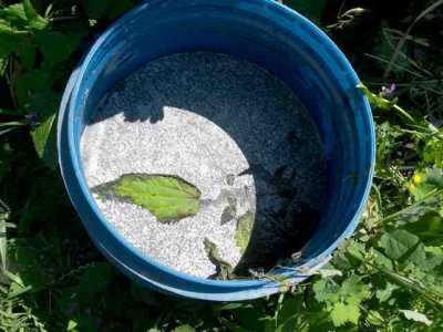 плеесень на зеленом удобрении